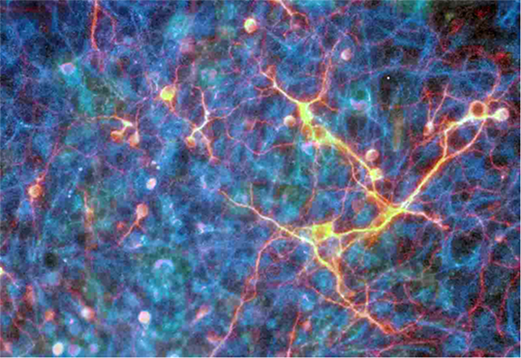 神経幹細胞の分化誘導